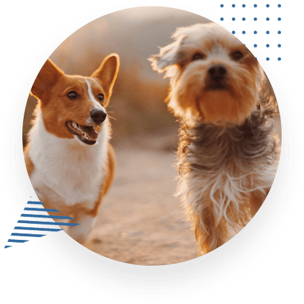 Healthy Pets Running And Playing